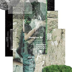 Campanella / Douglas fir [DIGITAL]