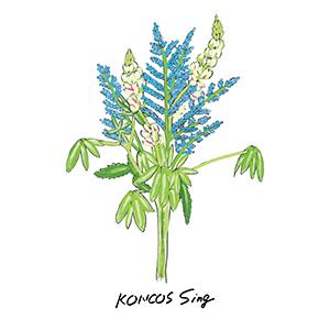KONCOS / Sing [DIGITAL]
